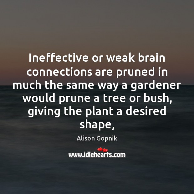 Ineffective or weak brain connections are pruned in much the same way Image
