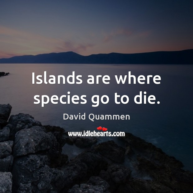 Islands are where species go to die. Image