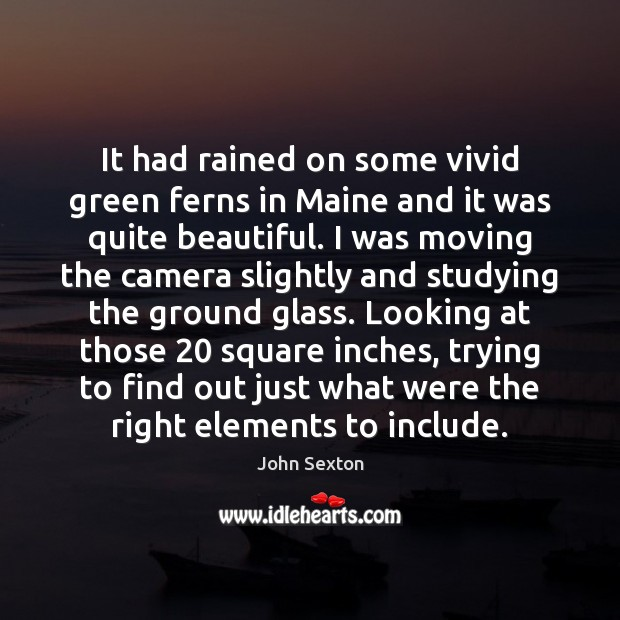 Image, It had rained on some vivid green ferns in Maine and it