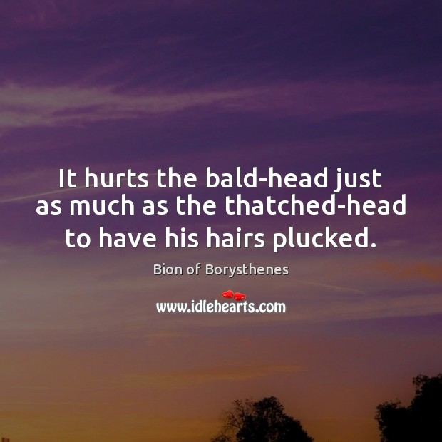 Image, It hurts the bald-head just as much as the thatched-head to have his hairs plucked.