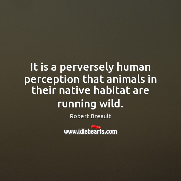 It is a perversely human perception that animals in their native habitat are running wild. Image