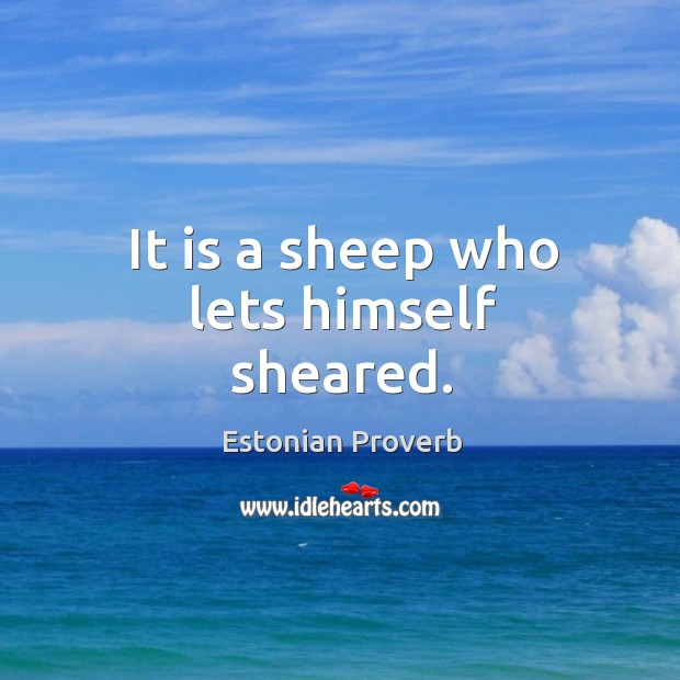 Image, It is a sheep who lets himself sheared.