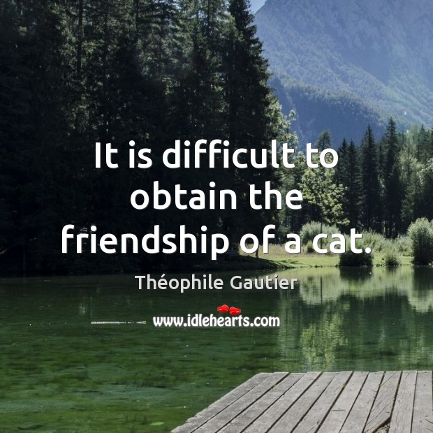 Image, It is difficult to obtain the friendship of a cat.