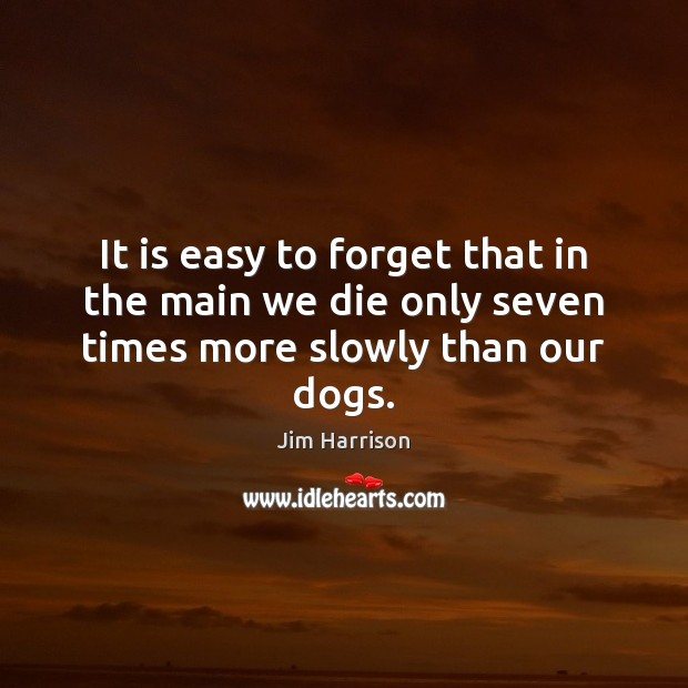 It is easy to forget that in the main we die only seven times more slowly than our dogs. Jim Harrison Picture Quote