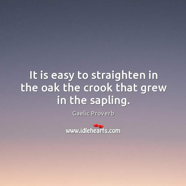 It is easy to straighten in the oak the crook that grew in the sapling. Gaelic Proverbs Image