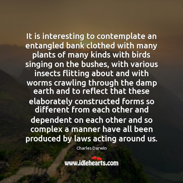 It is interesting to contemplate an entangled bank clothed with many plants Charles Darwin Picture Quote