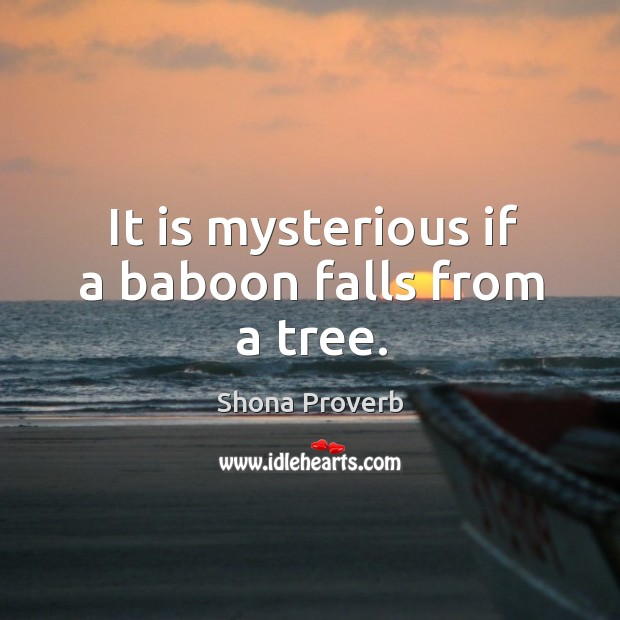 Image, It is mysterious if a baboon falls from a tree.