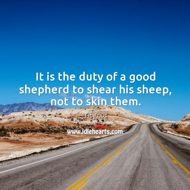 It is the duty of a good shepherd to shear his sheep, not to skin them. Image