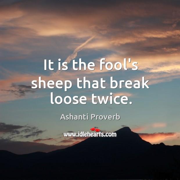 It is the fool's sheep that break loose twice. Ashanti Proverbs Image