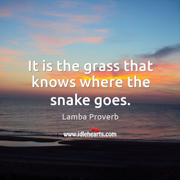 It is the grass that knows where the snake goes. Lamba Proverbs Image