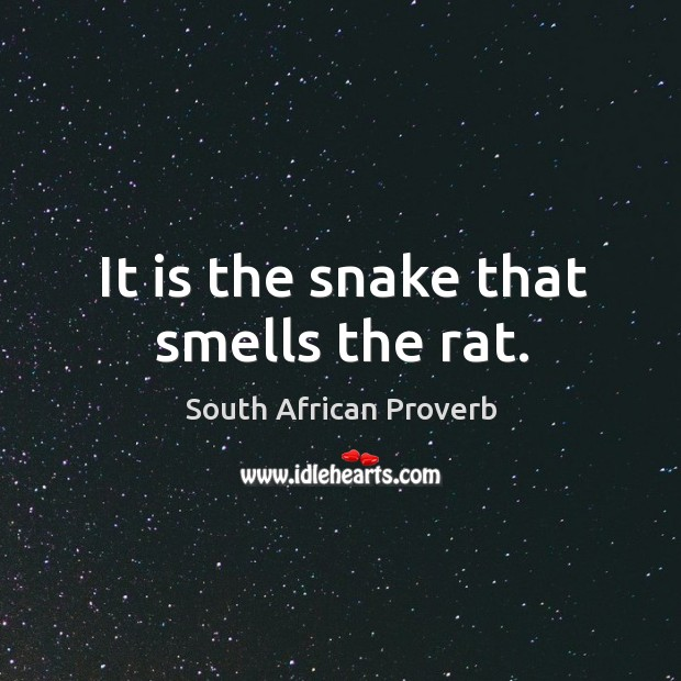 It is the snake that smells the rat. South African Proverbs Image