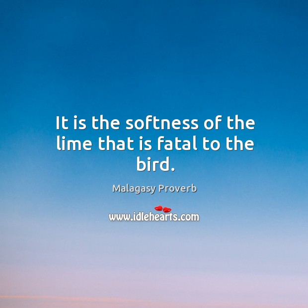 It is the softness of the lime that is fatal to the bird. Malagasy Proverbs Image