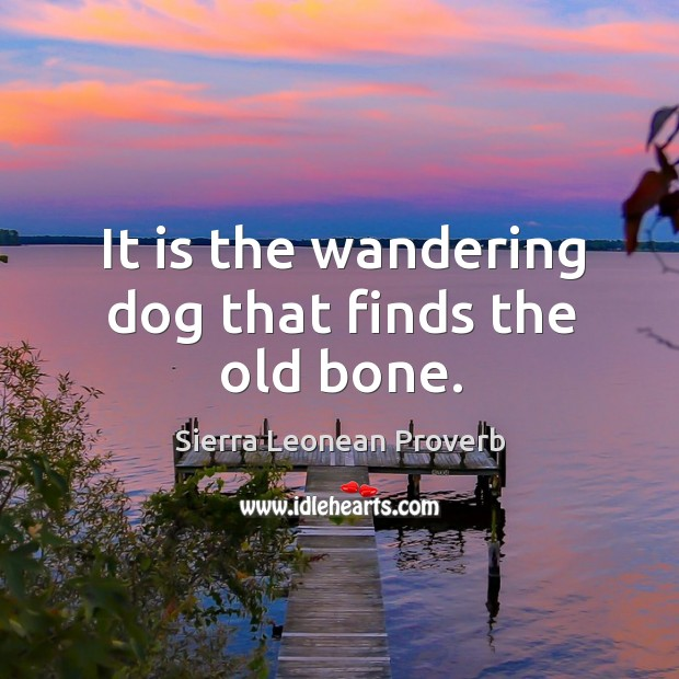 It is the wandering dog that finds the old bone. Sierra Leonean Proverbs Image