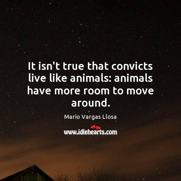 It isn't true that convicts live like animals: animals have more room to move around. Image