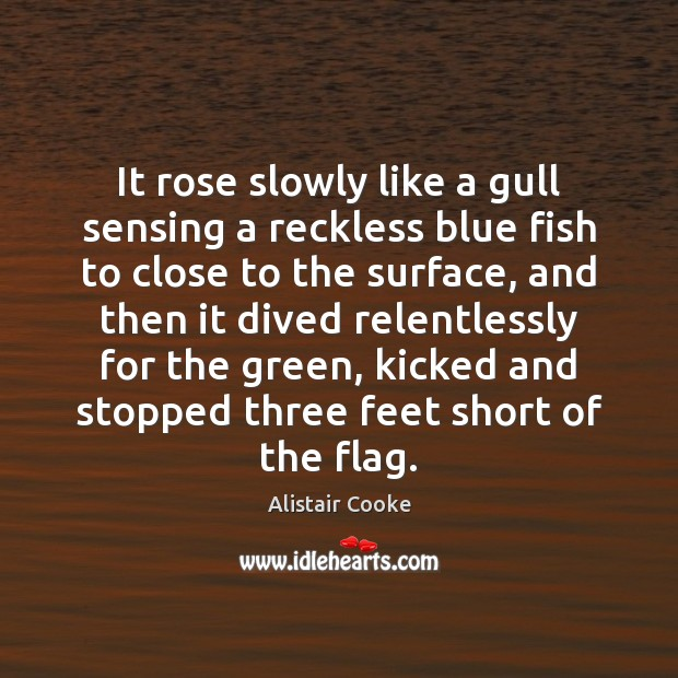 It rose slowly like a gull sensing a reckless blue fish to Alistair Cooke Picture Quote