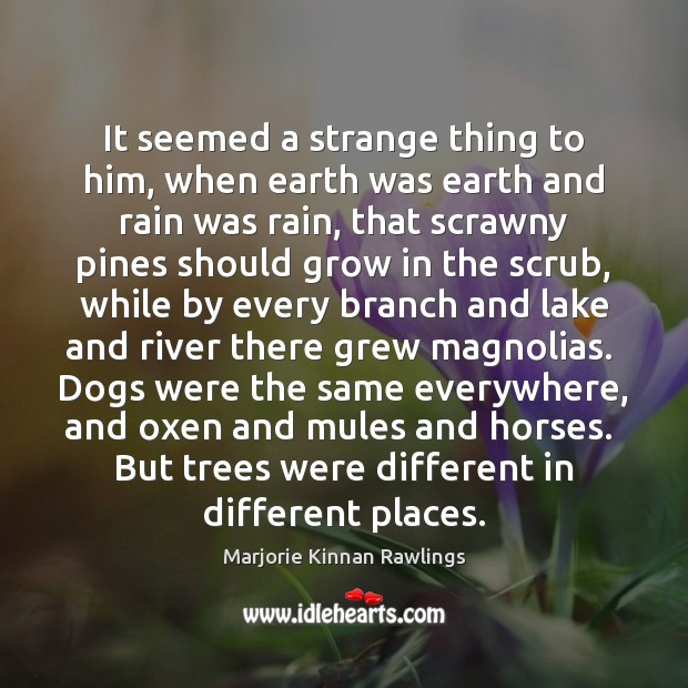It seemed a strange thing to him, when earth was earth and Marjorie Kinnan Rawlings Picture Quote