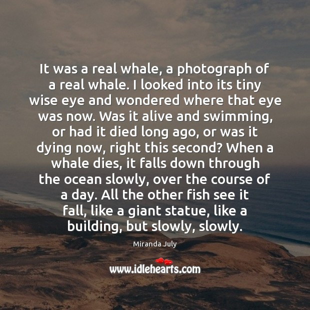 It was a real whale, a photograph of a real whale. I Miranda July Picture Quote