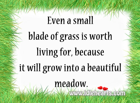 Even A Small Blade Of Grass Is Worth Living For