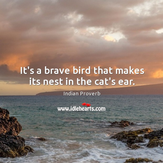 It's a brave bird that makes its nest in the cat's ear. Indian Proverbs Image