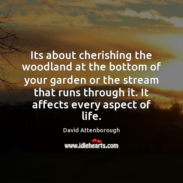 Image, Its about cherishing the woodland at the bottom of your garden or