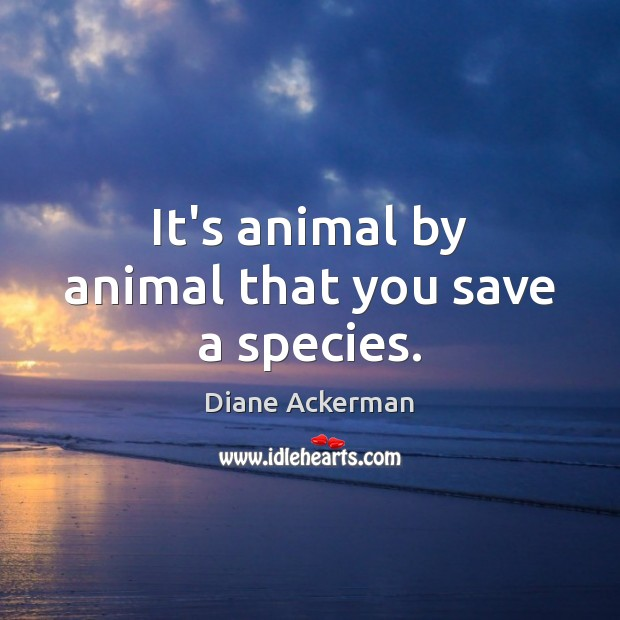 It's animal by animal that you save a species. Diane Ackerman Picture Quote