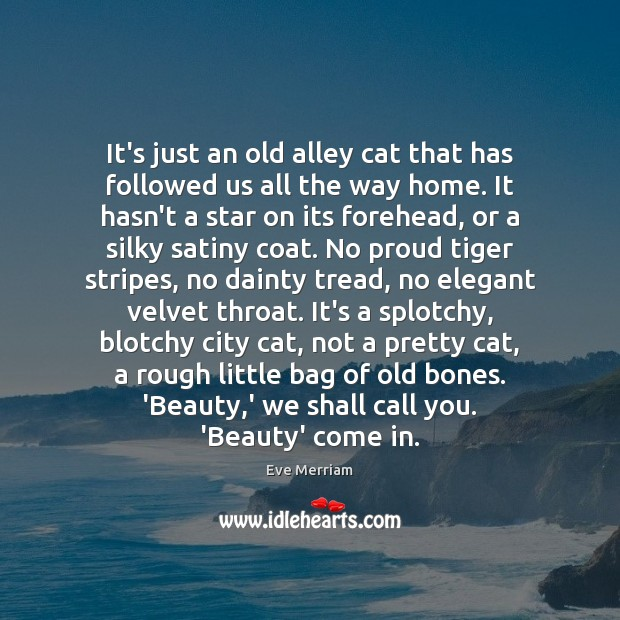 Image, It's just an old alley cat that has followed us all the