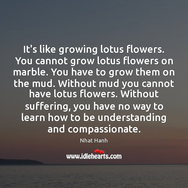Its Like Growing Lotus Flowers You Cannot Grow Lotus Flowers On