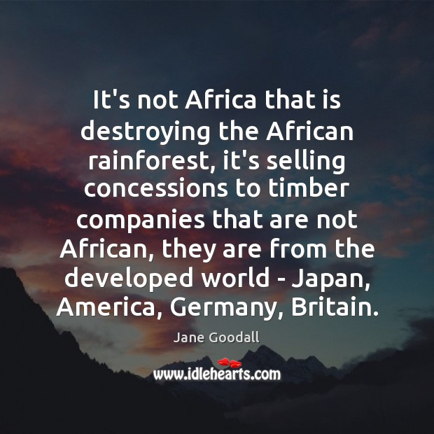 Image, It's not Africa that is destroying the African rainforest, it's selling concessions