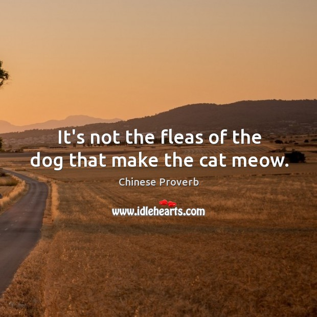 Image, It's not the fleas of the dog that make the cat meow.