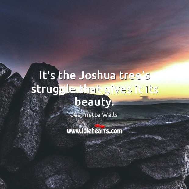 It's the Joshua tree's struggle that gives it its beauty. Jeannette Walls Picture Quote