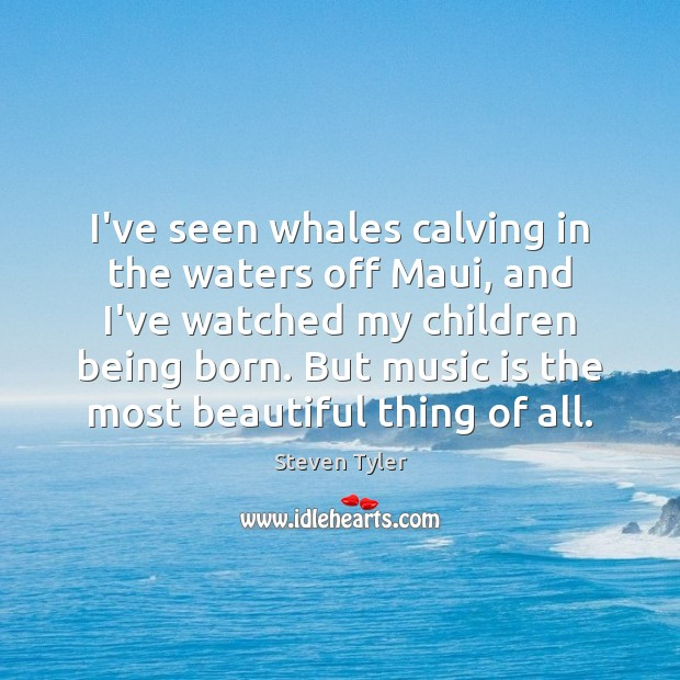 I've seen whales calving in the waters off Maui, and I've watched Steven Tyler Picture Quote
