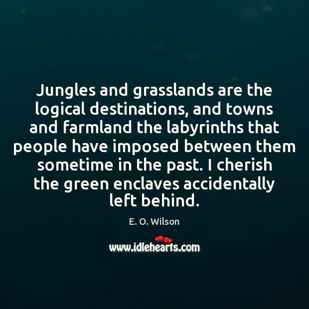 Jungles and grasslands are the logical destinations, and towns and farmland the E. O. Wilson Picture Quote