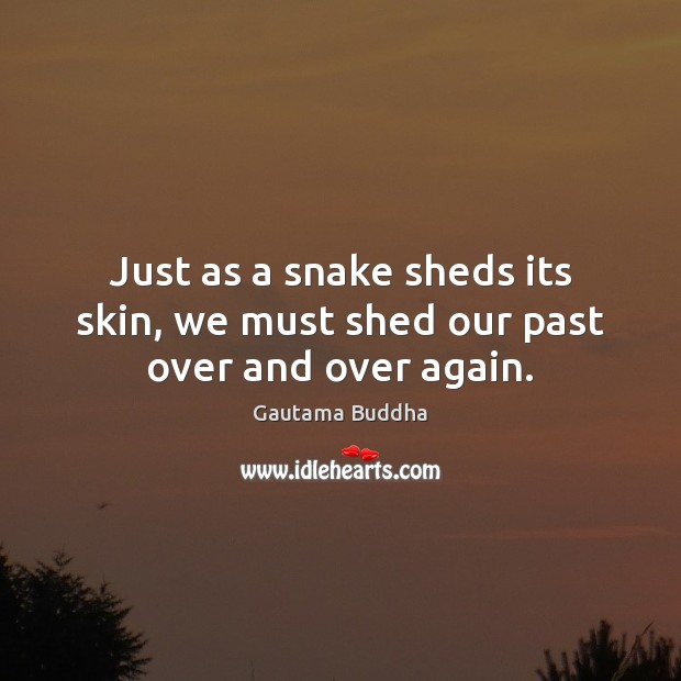 Just as a snake sheds its skin, we must shed our past over and over again. Gautama Buddha Picture Quote