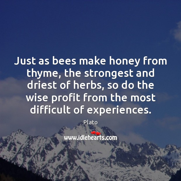 Just as bees make honey from thyme, the strongest and driest of Plato Picture Quote