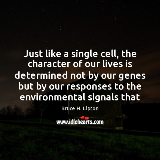Just like a single cell, the character of our lives is determined Bruce H. Lipton Picture Quote