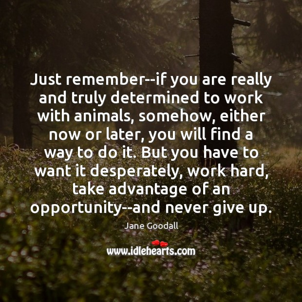 Just remember–if you are really and truly determined to work with animals, Never Give Up Quotes Image