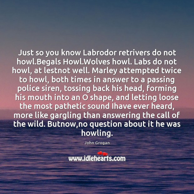 Image, Just so you know Labrodor retrivers do not howl.Begals Howl.Wolves