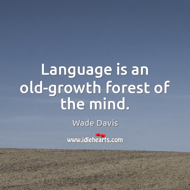 Language is an old-growth forest of the mind. Image
