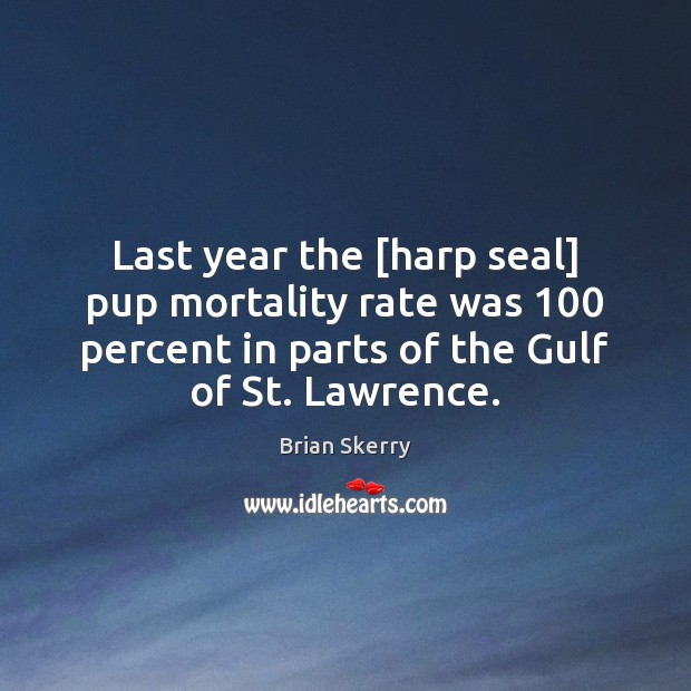 Image, Last year the [harp seal] pup mortality rate was 100 percent in parts