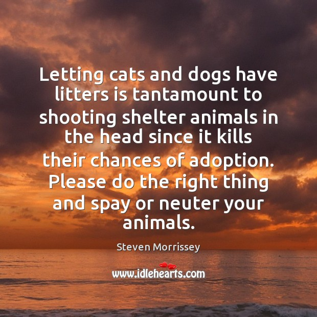 Letting cats and dogs have litters is tantamount to shooting shelter animals Steven Morrissey Picture Quote