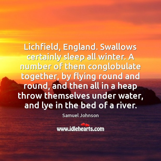 Lichfield, England. Swallows certainly sleep all winter. A number of them conglobulate Image