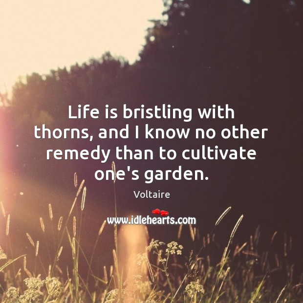 Image, Life is bristling with thorns, and I know no other remedy than to cultivate one's garden.