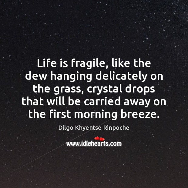 Life is fragile, like the dew hanging delicately on the grass, crystal Dilgo Khyentse Rinpoche Picture Quote
