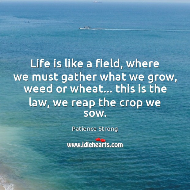 Life is like a field, where we must gather what we grow, Patience Strong Picture Quote