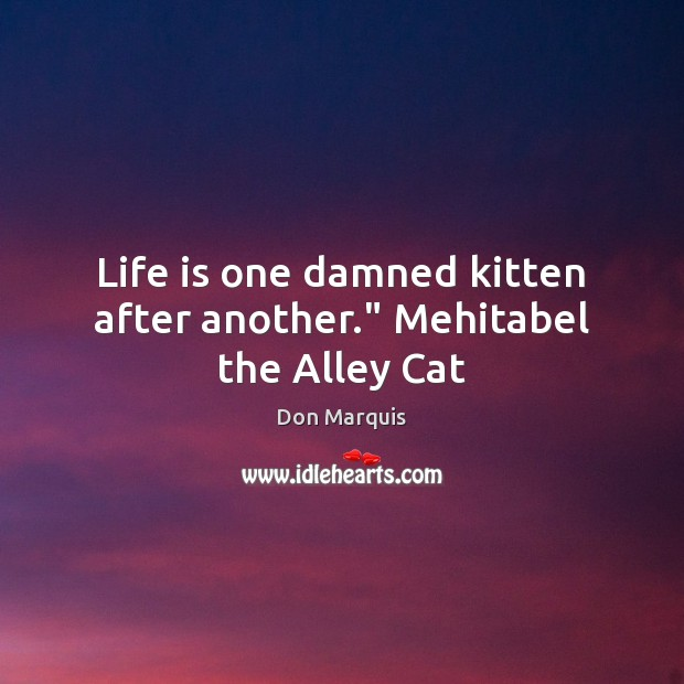 """Life is one damned kitten after another."""" Mehitabel the Alley Cat Don Marquis Picture Quote"""