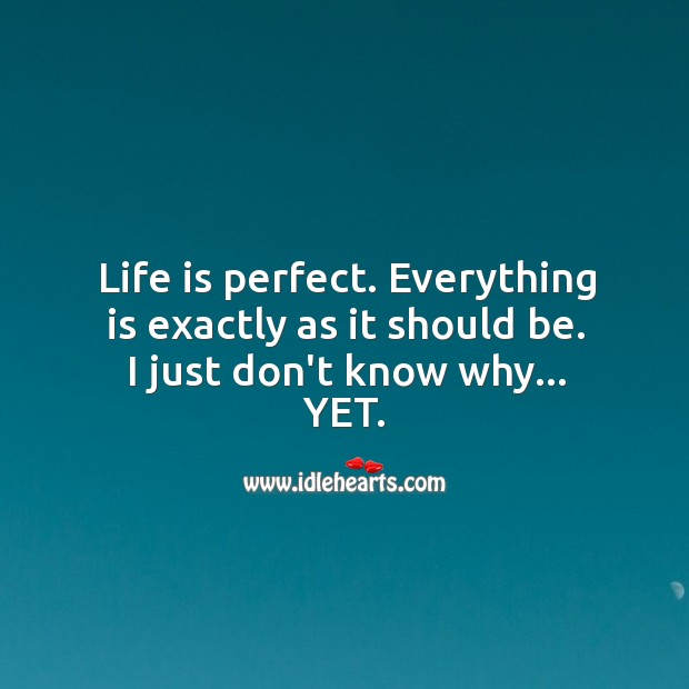 Image, Life is perfect. Everything is exactly as it should be.