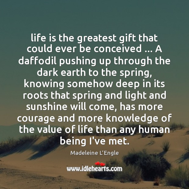 Life is the greatest gift that could ever be conceived … A daffodil Image
