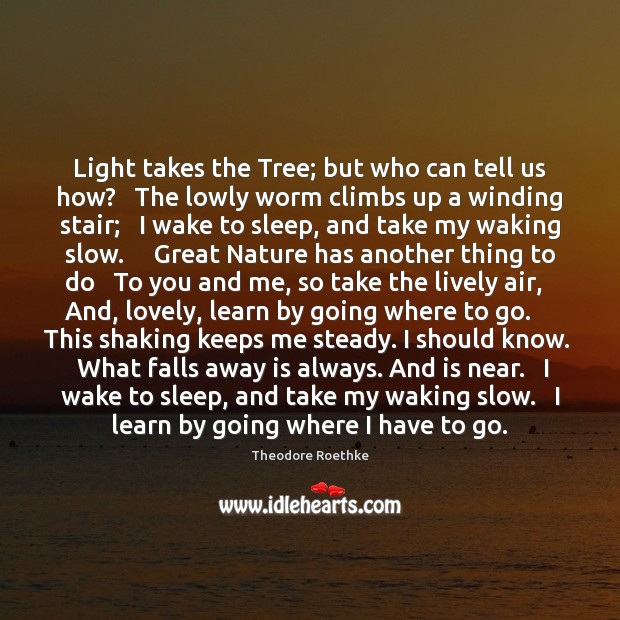 Light takes the Tree; but who can tell us how?   The lowly Image