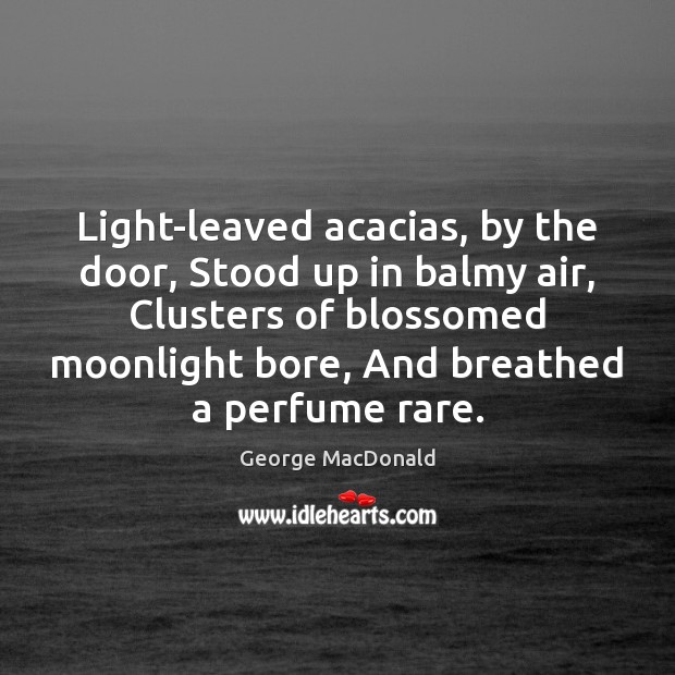 Light-leaved acacias, by the door, Stood up in balmy air, Clusters of George MacDonald Picture Quote