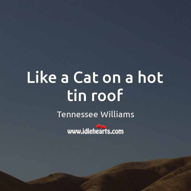 Like a Cat on a hot tin roof Tennessee Williams Picture Quote